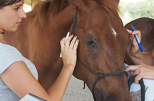 Horse-Courses-Class