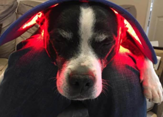 red-light-therapy-dogs