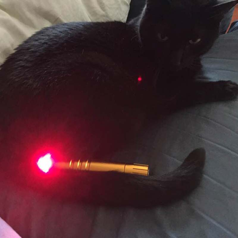 testimonial-red-light-therapy-cat-3